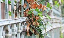 Fence with leaves